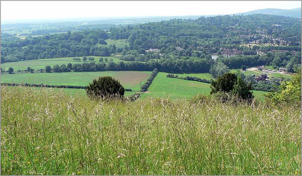 Emma e o condado de Surrey